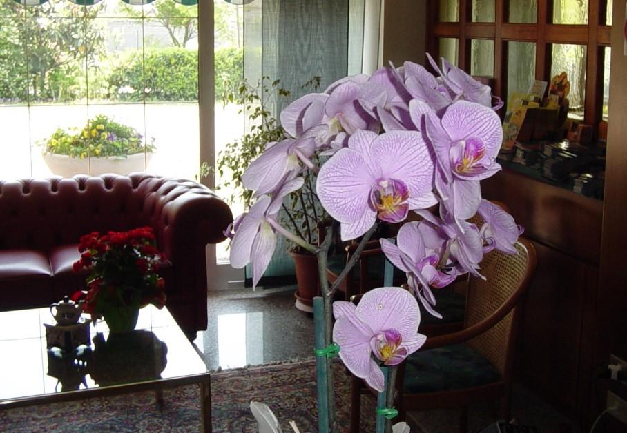 Chocolate and flowers hotel hotel alla campagna the for Decora la stanza delle winx
